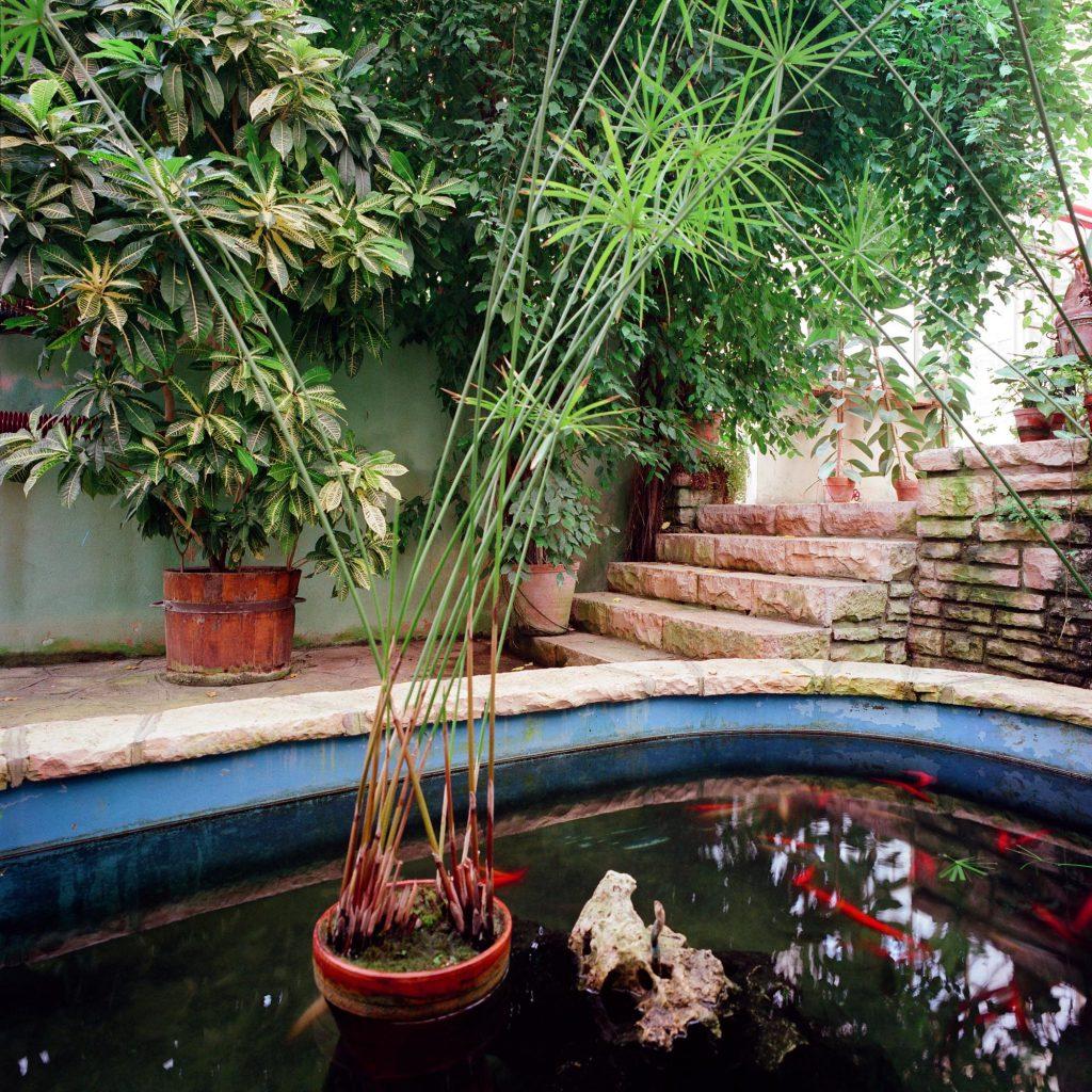 Goldfish, Brijuni, 1993