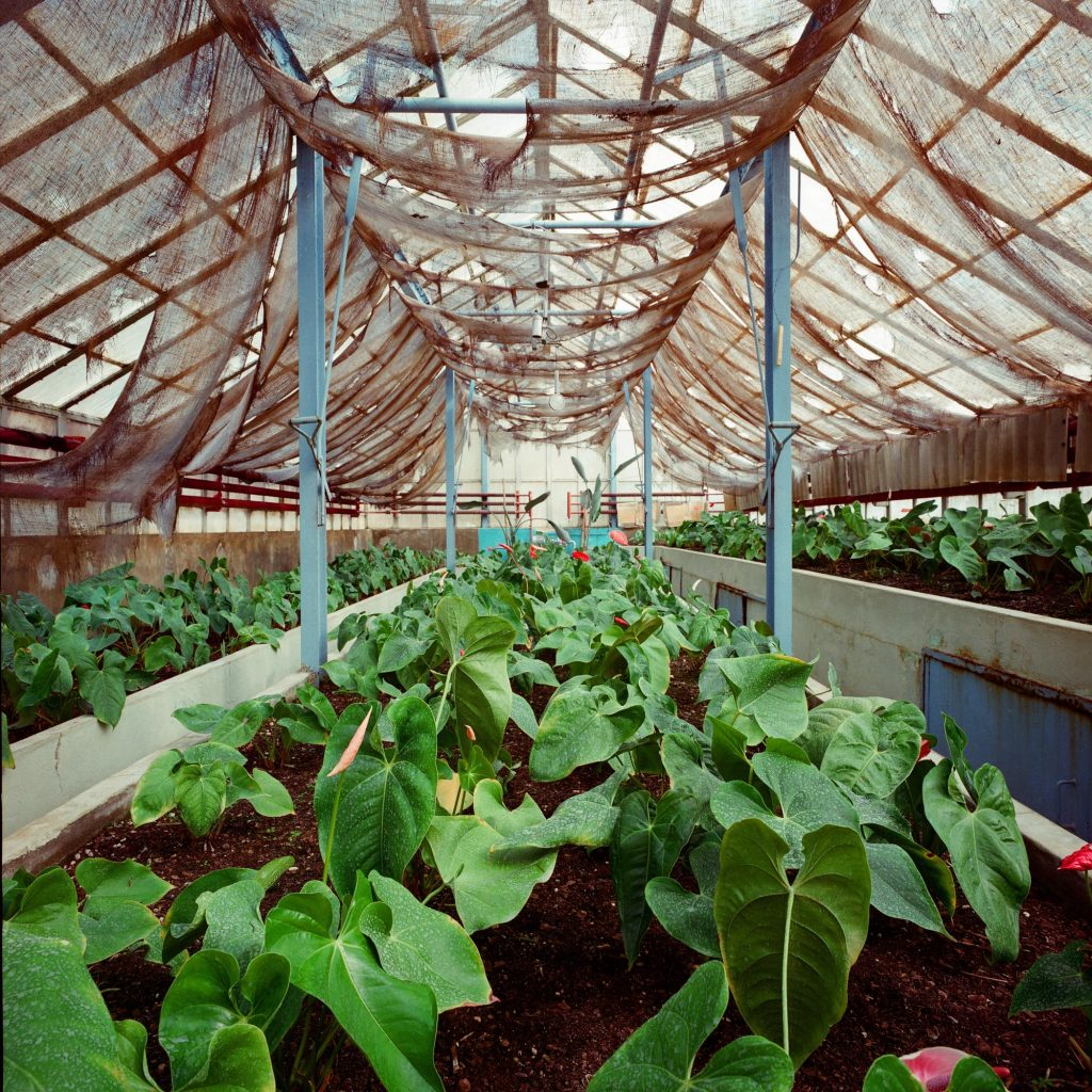 Glasshouse, Brijuni, 1993