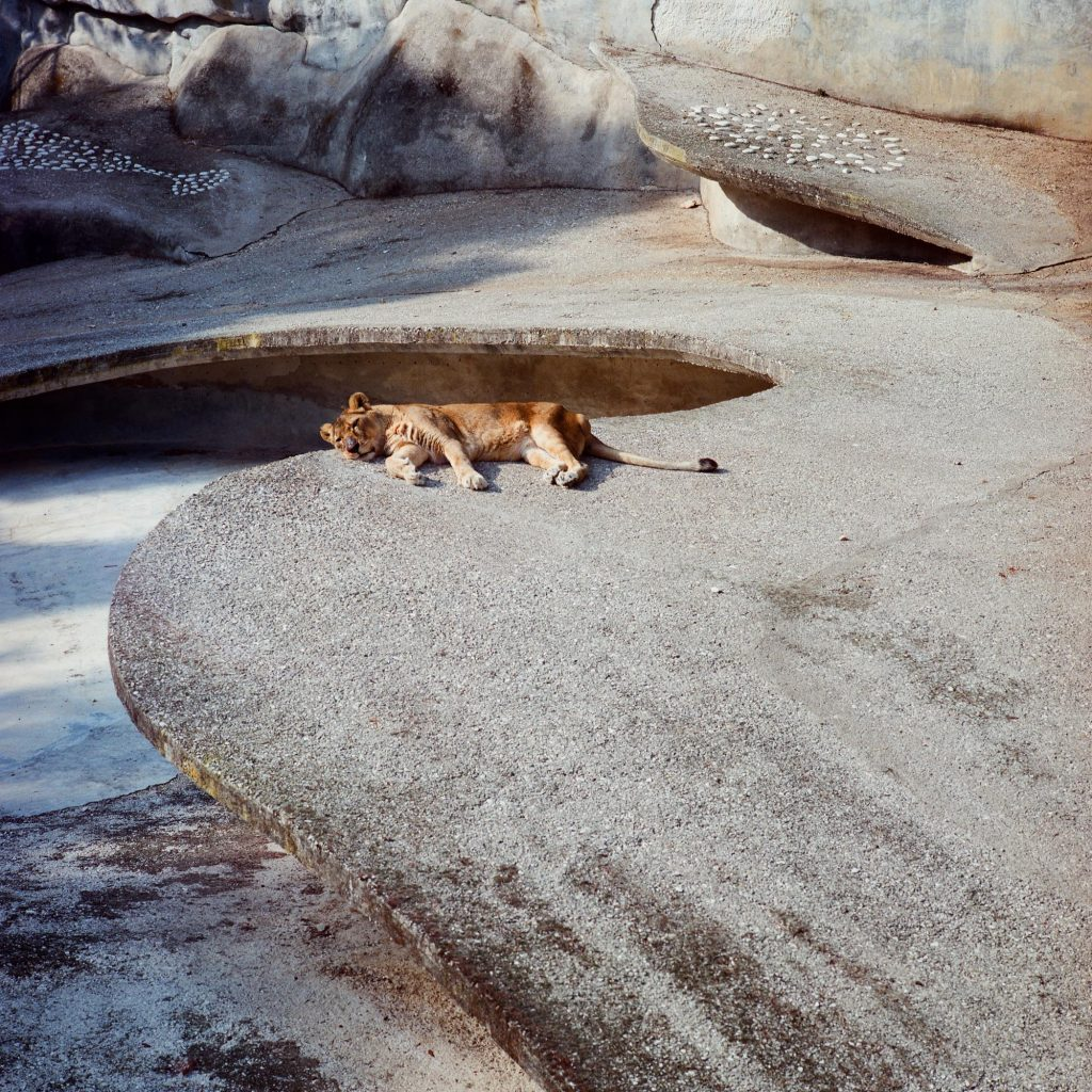 Mama Leone, Brijuni, 1993