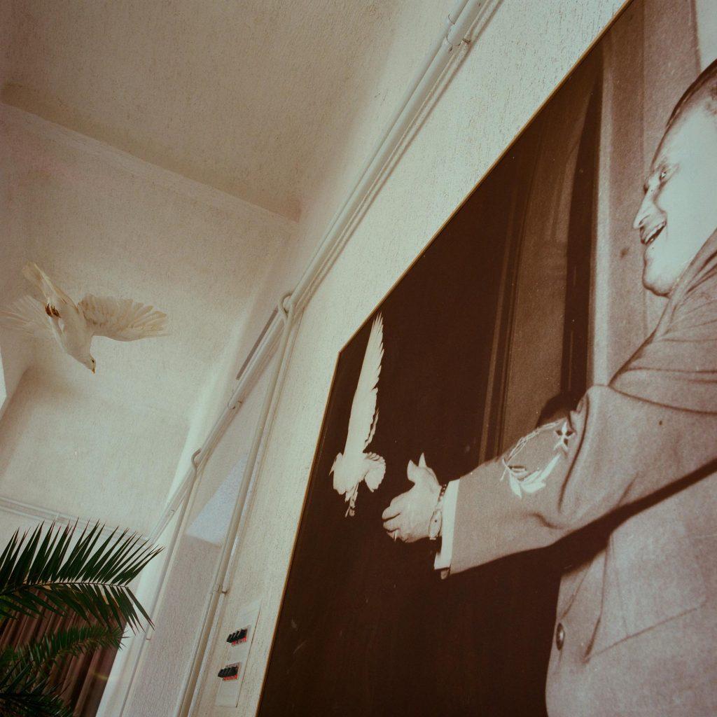 Dvije golubice mira, Brijuni, 1993