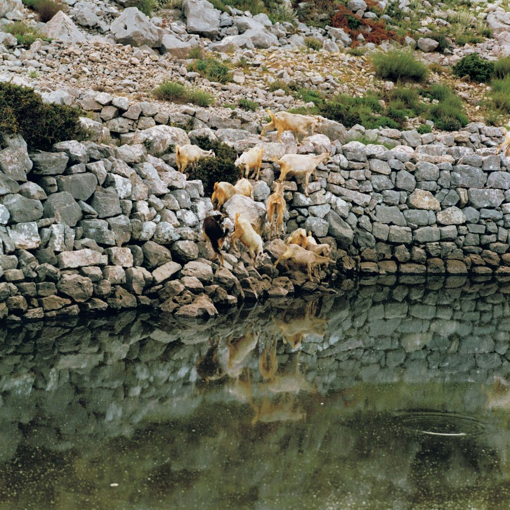 POJILO, kraj Mrčeva, svibanj 1990.